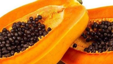 Photo of UNBELIEVABLE HEALTH BENEFITS OF PAWPAW SEED
