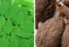 Photo of EFFECT OF MORINGA AND ALLIGATOR PEPPER THERAPY IN 7 DAYS