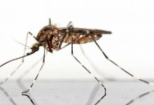 Photo of KEEP MOSQUITOES AWAY FORM YOUR HOME