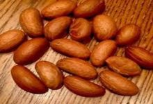 Photo of KOLA NUT FOR HEALTHY LIVING