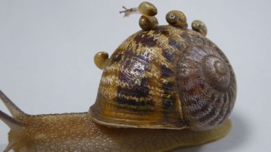 Photo of 6 Health Benefits Of Eating SNAIL You Don't Know
