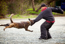 Photo of HOW TO TAKE CARE OF DOG BITE AT HOME