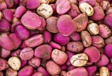 Photo of POTENTIAL HEALTH BENEFIT OF KOLA NUT