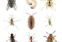 Photo of CONTROL PEST NATURALLY