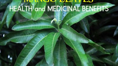 Photo of Medicinal Benefit Of Mango Leaves