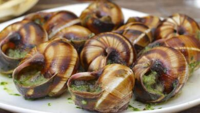 Photo of 6 HEALTH BENEFITS OF EATING SNAIL