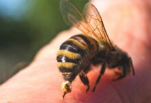 Photo of 8 HOME REMEDIES FOR WASP AND BEE STINGS