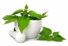 Photo of 18 EFFECTIVE HEALTH BENEFITS OF STINGING NETTLE
