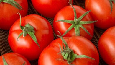 Photo of EAT MORE TOMATO TO BOOST FERTILITY