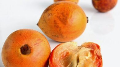 Photo of AFRICAN STAR APPLE HEALTH BENEFITS
