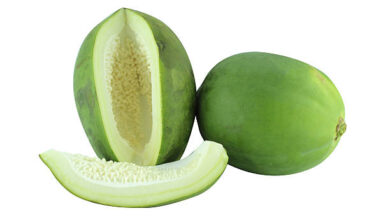 Photo of UNRIPE PAWPAW BEST TREATMENT FOR ULCER