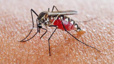 Photo of 7 FOODS THAT CAN PROTECT YOU AGAINST MOSQUITO BITES