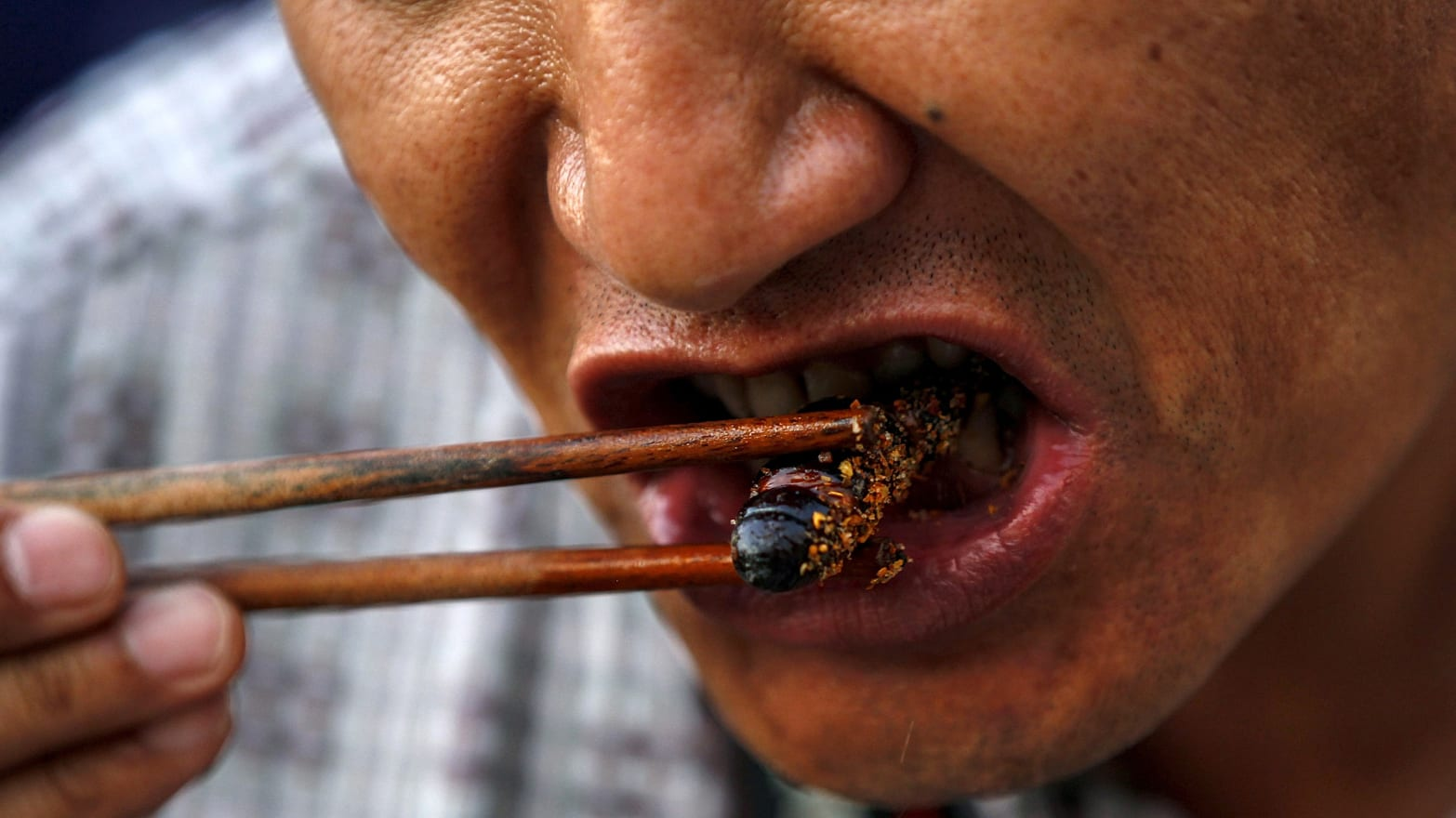 Photo of Reasons why you should eat insects