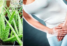 Photo of STOPPING FREQUENT URINATING WITH ALOE VERA