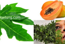 Photo of 5 Ailments that pawpaw leaf extract can fight naturally