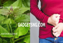 Photo of AWOLOWO LEAF: BEST HOME REMEDY FOR FIBROID AND BLEEDING