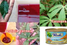 Photo of BOOST BLOOD LEVELS USING THIS CASSAVA METHOD