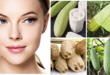 Photo of UNBELIEVABLE HEALTH BENEFITS OF VEGETABLE SPONGE (LUFFA CYLINDRICA)
