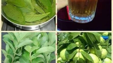 Photo of MEDICINAL BENEFITS OF GUAVA LEAF TEA