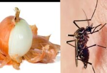 Photo of ONION PEEL AS MOSQUITO KILLER FOR OVERNIGHT RESULT