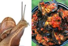 Photo of HEALTH BENEFITS OF SNAIL FOOD IN THE BODY
