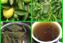 Photo of NATURAL REMEDY FOR CLEANSING THE WOMB